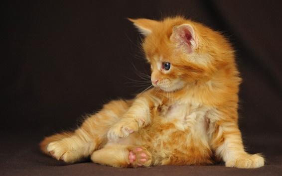Обои Вид сбоку Оранжевый котенок