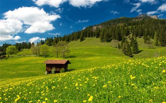 Papéis de Parede Pasto, Alpes Bávaros, Alemanha, grama, campo verde, flores