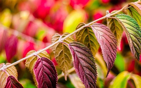 Wallpaper Purple leaves macro, nature plants