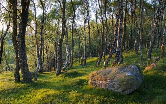 Wallpaper Spring forest trees, grass, stone