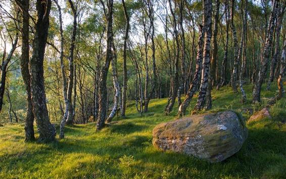 Обои Весна лесные деревья, трава, камень