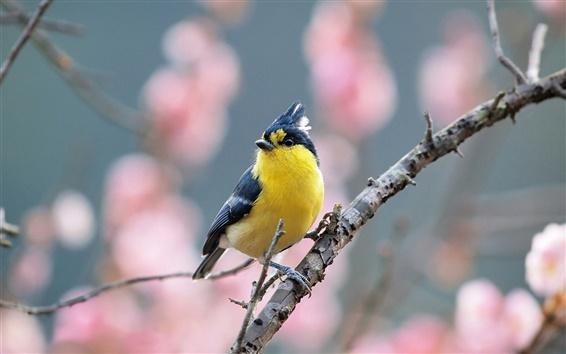 Papéis de Parede Primavera, árvore, pássaro, flores