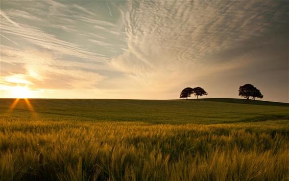 Wallpaper Sunset nature, green meadow, grass, trees