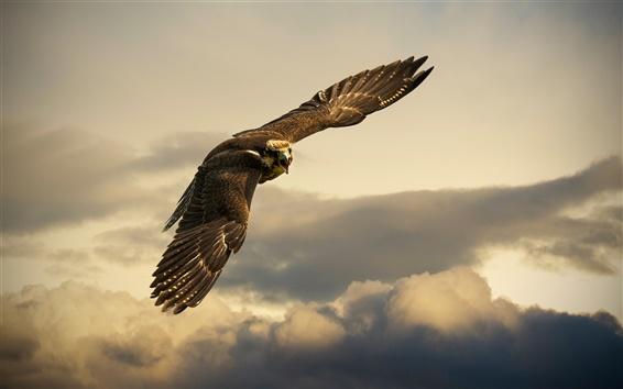 Wallpaper Switzerland, bird flight in sky, eagle, clouds