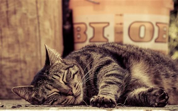 Обои Полосатый, спящая кошка, лапы