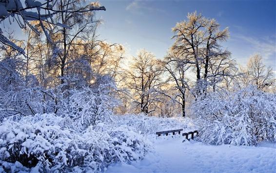 Papéis de Parede Espessa neve, árvores, ramos, inverno, os raios do sol