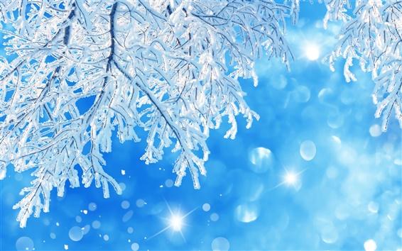 壁紙 木の枝、雪、冬、青