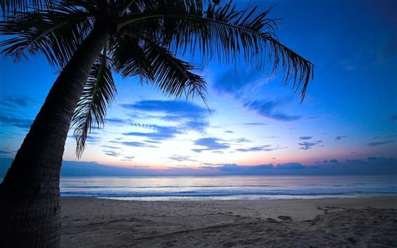 Wallpaper Tropical, palm tree, cloudy sky, Caribbean, sea, beach, dawn, sunlight