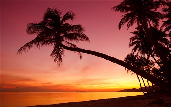 Wallpaper Tropical, sunset, palm trees, silhouette, beach, sea