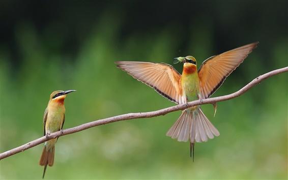 Обои Две птицы, насекомые, продукты питания