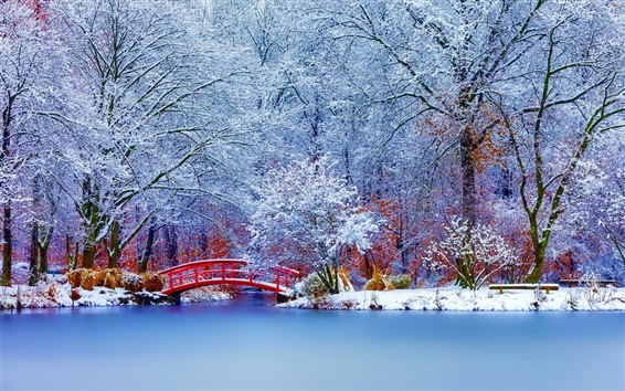 Wallpaper Winter park, snow, trees, bridge
