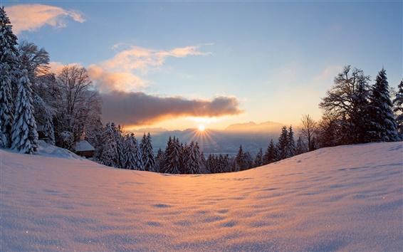 Wallpaper Winter, snow, sun, light, forest, trees, sunset