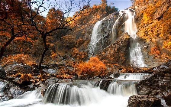Обои Осень, деревья, желтые, скалы, водопады