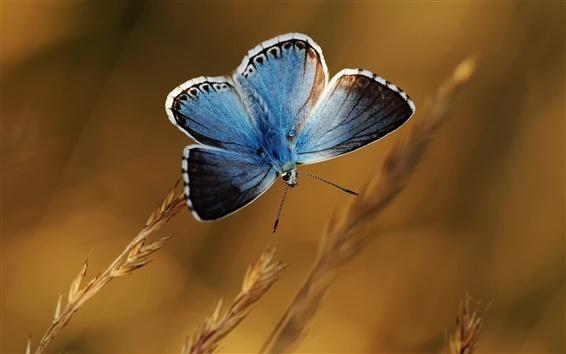 Wallpaper Blue butterfly, plants, bokeh