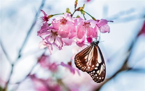 Обои Бабочка, веточка, сакура цветение, розовые цветы, весна, размытость