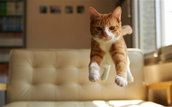 Papéis de Parede Salto do gato, casa