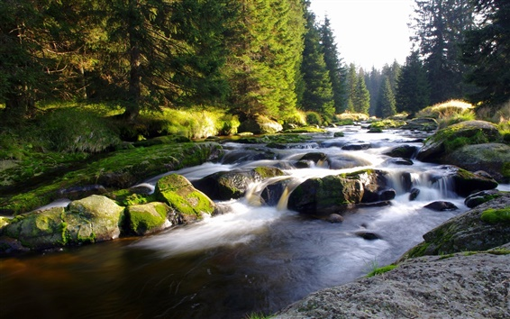 Fondos de pantalla República Checa, Bohemia, árboles, río