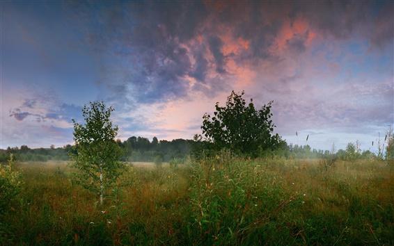 Обои Лес, луг, деревья, березы, трава, лето, утро, облака