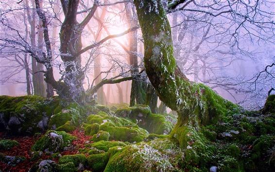 Обои Лес, туман, скалы, мох, деревья