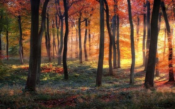 Papéis de Parede Floresta, árvores, cores do outono, os raios do sol