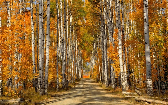 Wallpaper Forest, trees, birch leaves, autumn, road