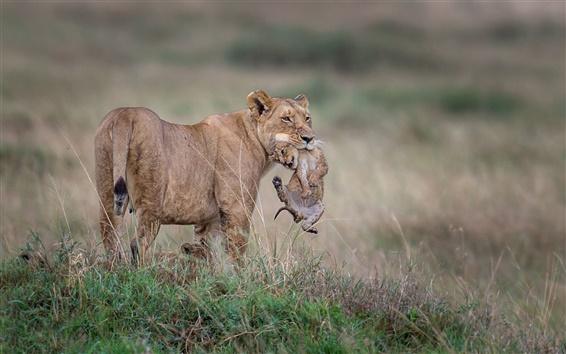 Papéis de Parede Leoa com filhotes, animais selvagens