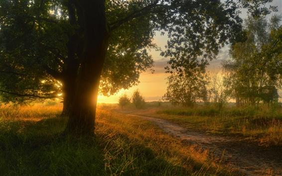 Обои Нижняя Саксония, Германия, природа пейзаж, закат, деревья, трава, осень