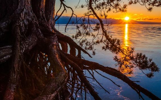 Wallpaper Michigan, lake, sunset, pine tree, roots