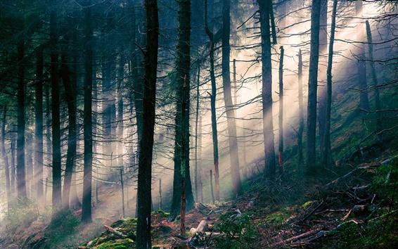 Fond d'écran Nature paysage, forêt, lumière, rayons du soleil, les arbres