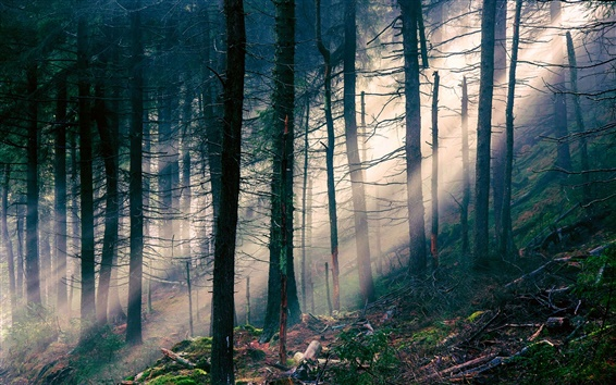 Wallpaper Nature landscape, forest, light, sun rays, trees
