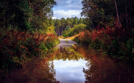 Wallpaper Nature scenery, autumn, road, forest, trees, water, puddle