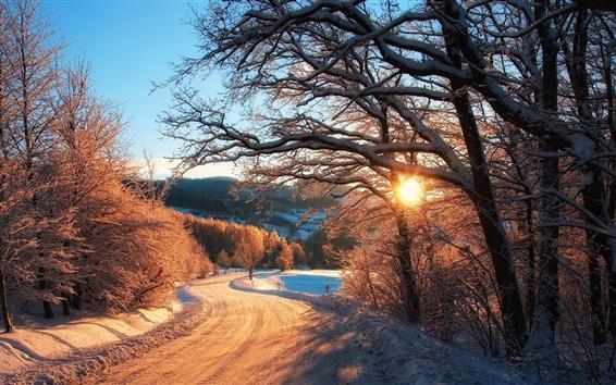 배경 화면 자연 겨울, 눈, 나무, 숲, 일몰 광선
