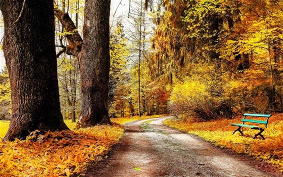 Обои Парк осенью природа, деревья, желтые листья, дорога, скамейка, мороз