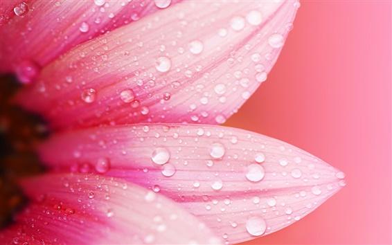 Wallpaper Pink flower close-up, petals, dew, water drops, blur background