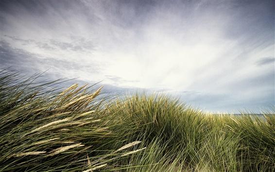 Fond d'écran Mer, plage, herbe, ciel