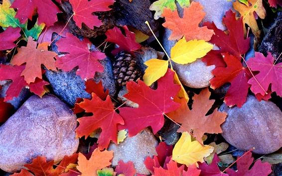Wallpaper Stones, red maple leaves, pine cones, autumn