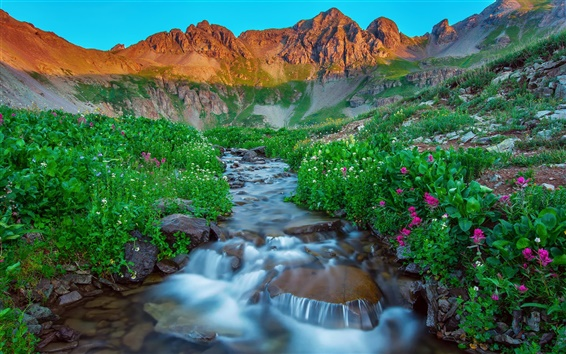 Wallpaper USA, Silverton, Colorado, morning, mountains, summer, stream, rocks, flowers