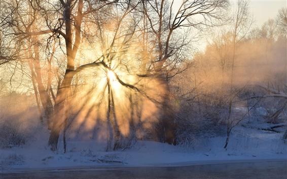 Обои Зима, утро, восход солнца, солнечные лучи, туман, деревья, снег