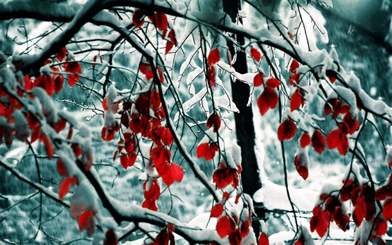 Wallpaper Winter, snow, trees, branches, red leaves