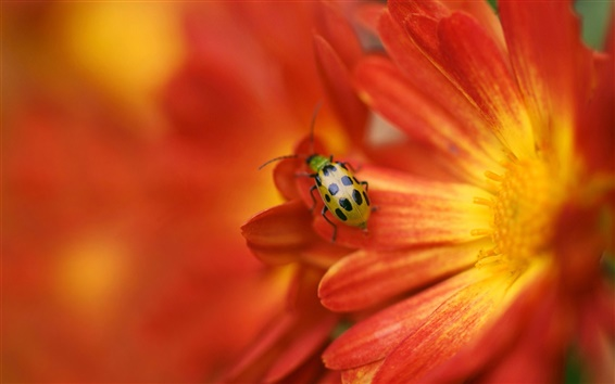 Wallpaper Yellow red flower, insect, ladybug, blurring