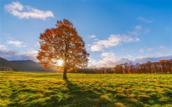 Papéis de Parede Outono, campos, árvore solitária, raios de sol