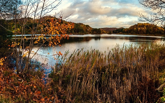 Wallpaper Autumn, pond, marsh, grass, trees, dry season