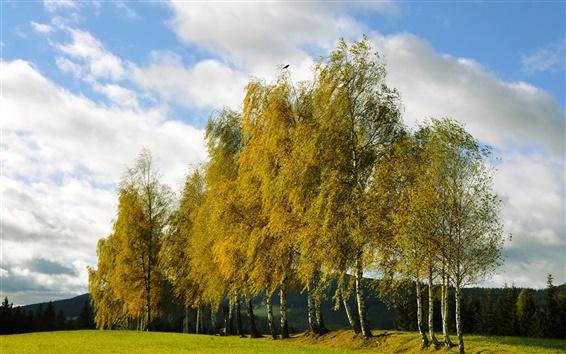 Wallpaper Autumn, trees, spruce grove, birch