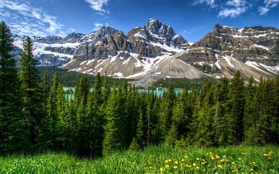 Wallpaper Canada, nature landscape, mountains, forest, Banff Park