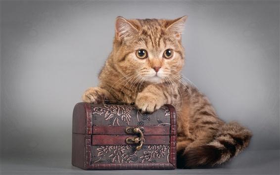 Fondos de pantalla Gato con la caja