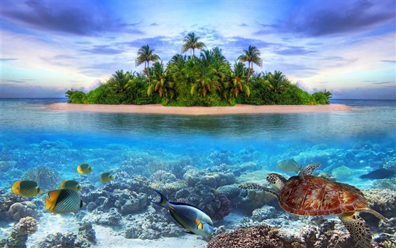 Wallpaper Coast landscape, island, sea, palm trees, fish, turtle
