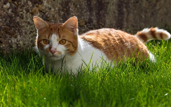 Wallpaper Cute cat, grass, white brown