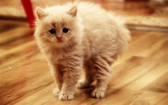 桌布 可愛的小貓在房間裡