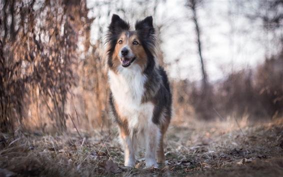 壁紙 犬、自然、ボケ