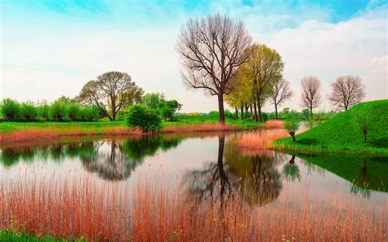 Papéis de Parede Inglaterra, primavera, árvores, rio, grama